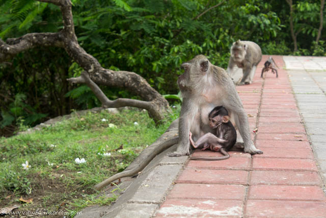 View of the Day – Monkeys in Bali, Indonesia